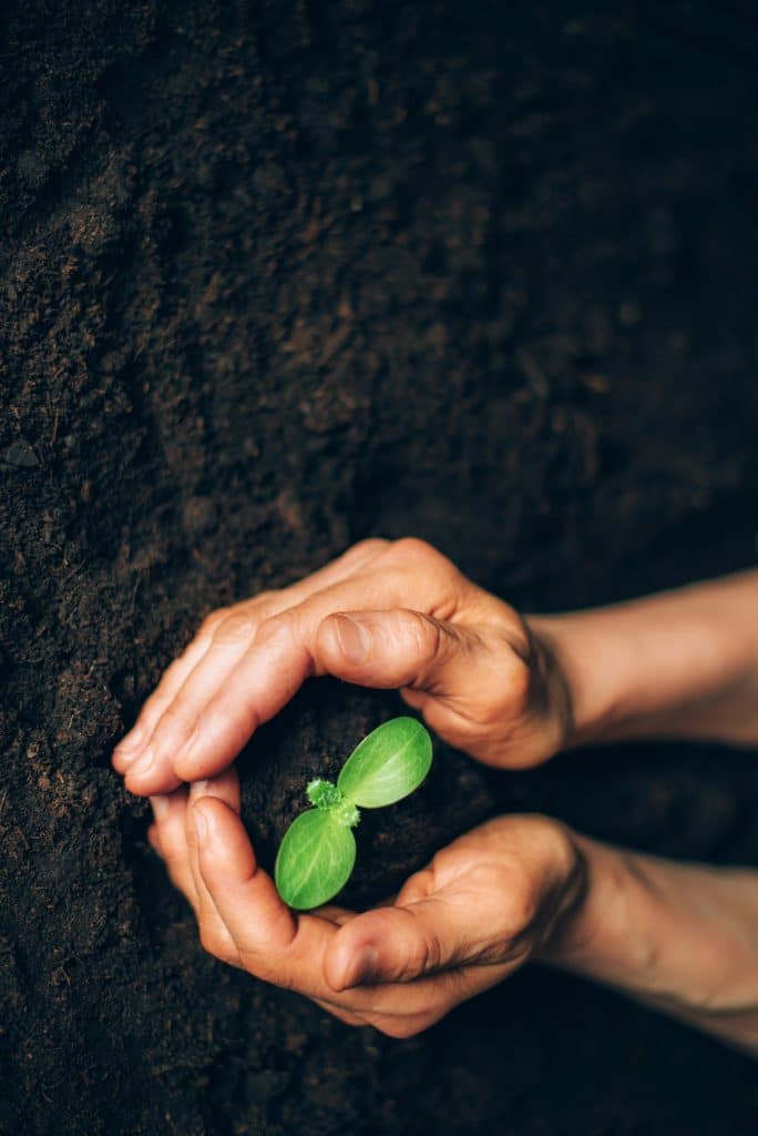 Hands holding green seedling, sprout over soil. Top view. New life, eco, sustainable living, zero